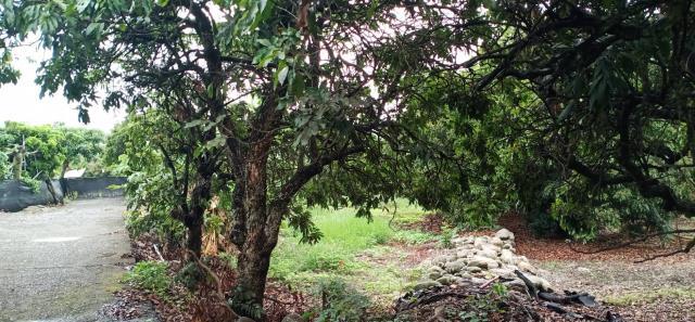 山腳路平地果園